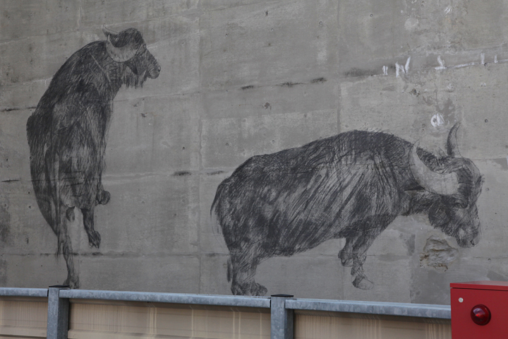 ダヴィデ・リヴァルタの作品「水牛」