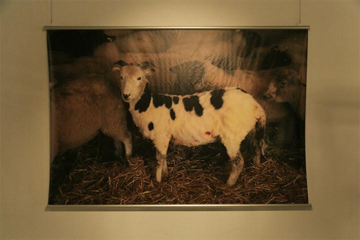 増山士郎《毛を刈った羊のために、その羊の羊毛でセーターを編む》ARTISANビル1階内壁 B日程(9月20日~10月27日)