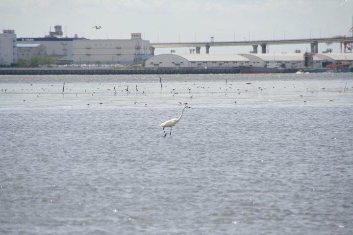 干潮時には鳥が餌を探して干潟に集まってくる