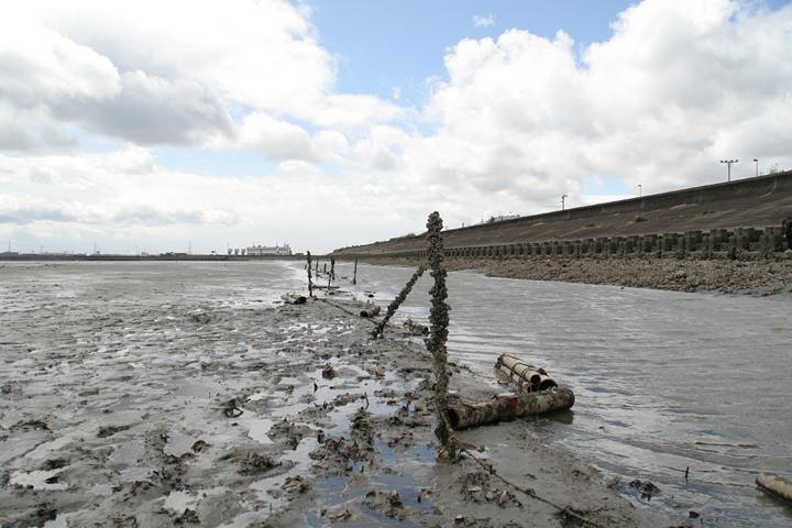 藤前干潟から日光川河口排水機場をのぞむ