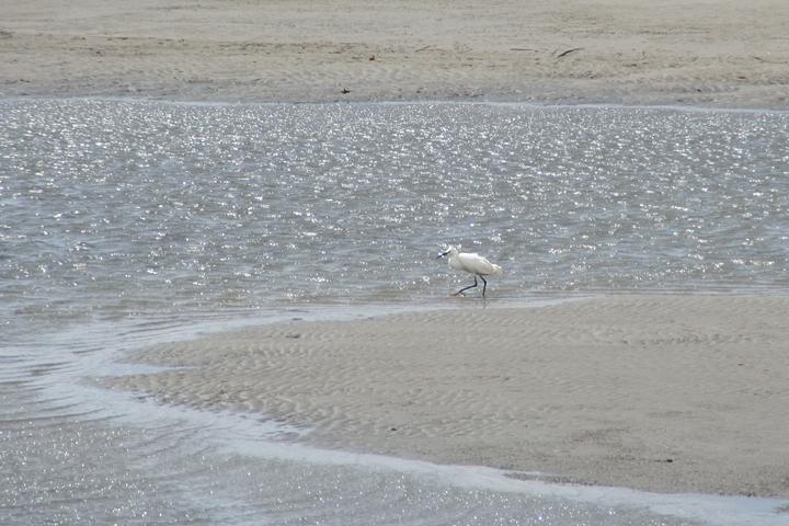宝神水処理センター前の白い鳥