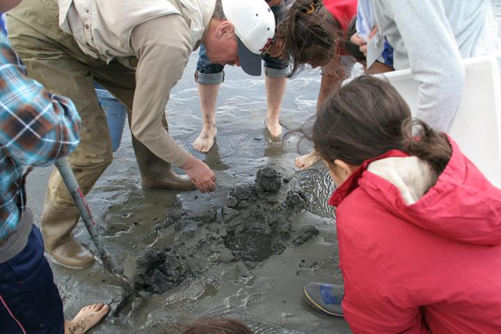 土を掘って干潟にすむ生物を調べる