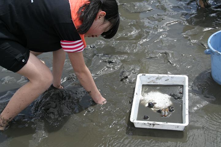 泥の中からたくさん貝も見つかった