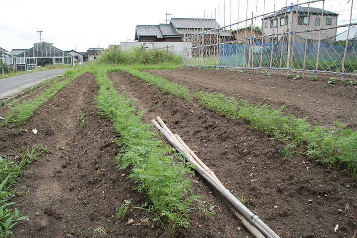 「とよあけEco堆肥」が使われている畑