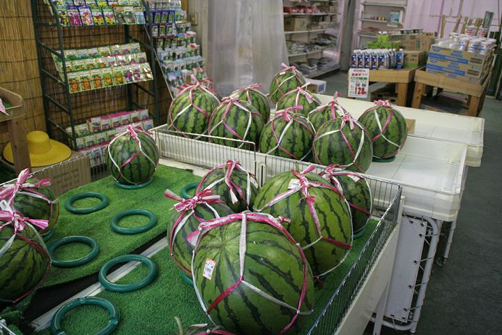 産地直売所にEco堆肥使用農産物が並ぶ