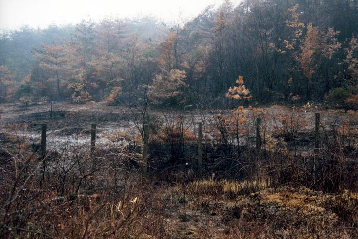 1993年の山火事直後の湿地(写真:柴田美子)