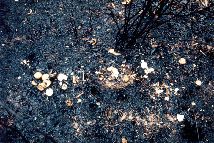 野火で焼けこげた地面(1993年)写真:柴田美子