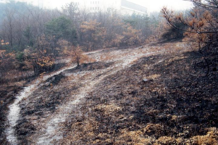 野火直後の里山の風景(1993年)写真:柴田美子
