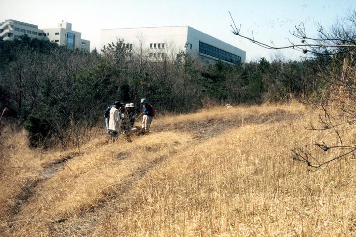 1994年、有志による八竜湿地保全活動がスタート(写真:柴田美子)