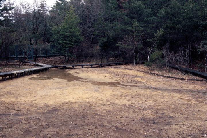 地面に水たまりが生まれている(1996年)写真:柴田美子