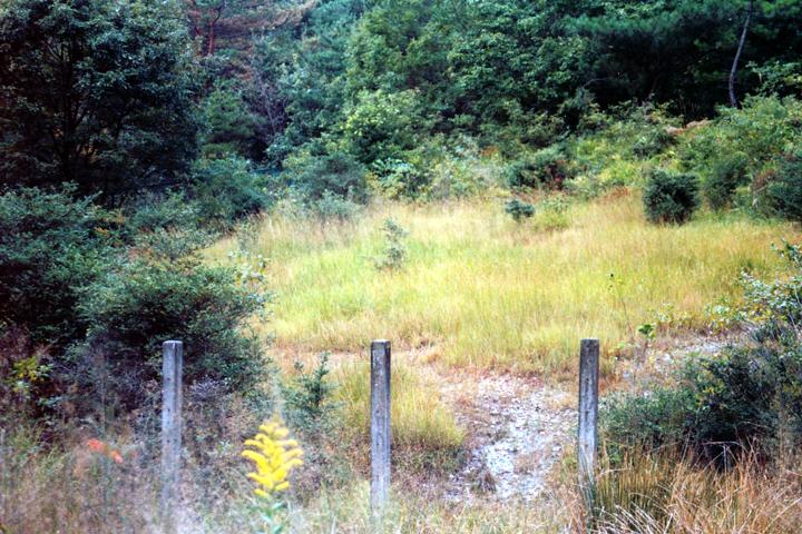 焼けただれた斜面にも草花が戻る(1999年)写真:柴田美子