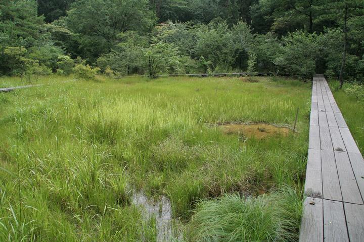 上段にある八竜湿地.草の間に水たまりがみえる