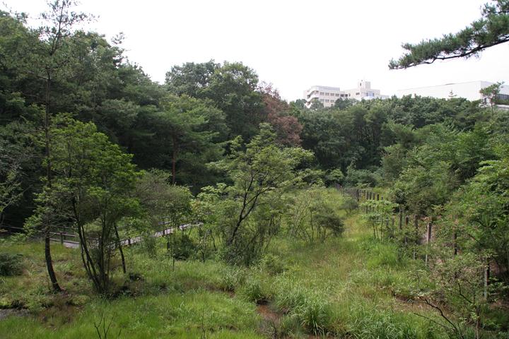 上段の湿地から下段の湿地を見下ろした様子