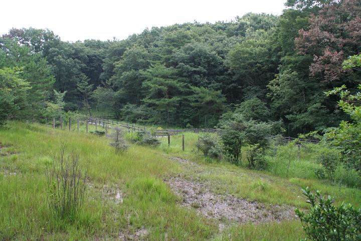 斜面の下に湿地に浮かんだ木道がみえる