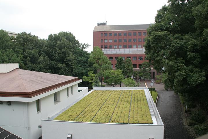 屋上緑化の取り組み