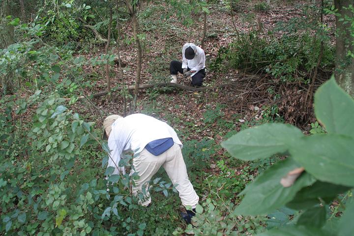 湿地を保全するため定期的に「水源の森と八竜湿地を守る会」有志による手入れが行われている