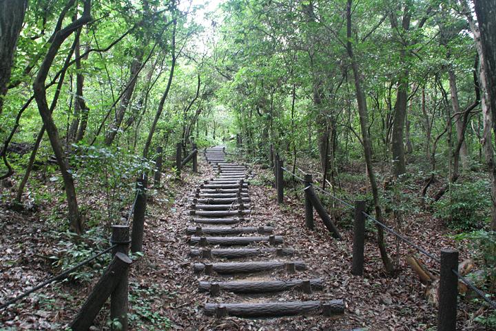 八竜緑地は散策コースとして整備されている