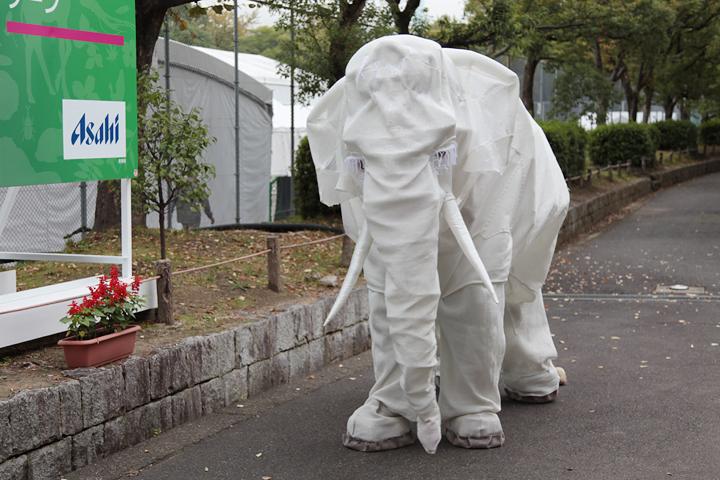 熱田神宮公園フェスティバルゾーン前での白いゾウのパフォーマンス