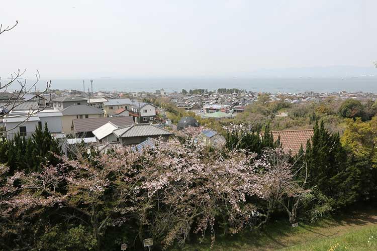 城型展望台付近から大野町を見る