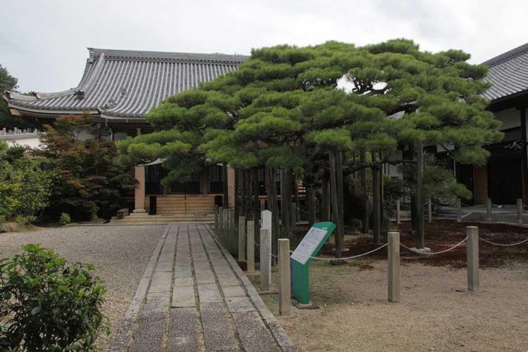 妙仙寺本堂と臥龍の松