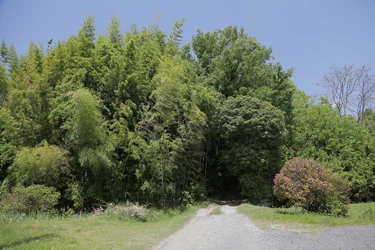 伊保西城跡へ通じる道