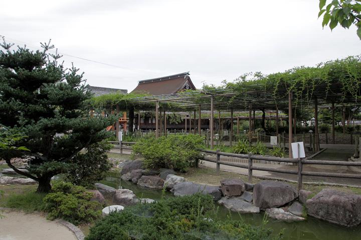 曼陀羅寺と曼陀羅寺公園藤棚
