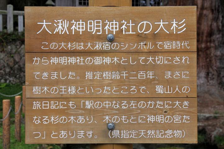 神明神社の大杉