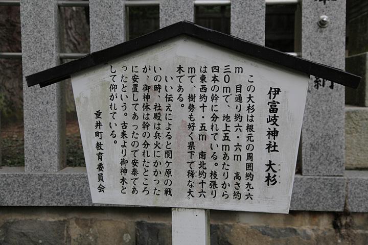 伊富岐神社大杉