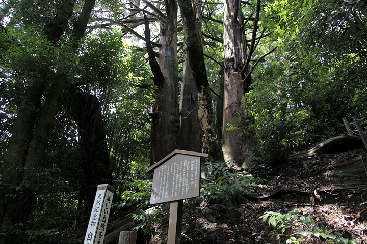 自害峯の三本杉
