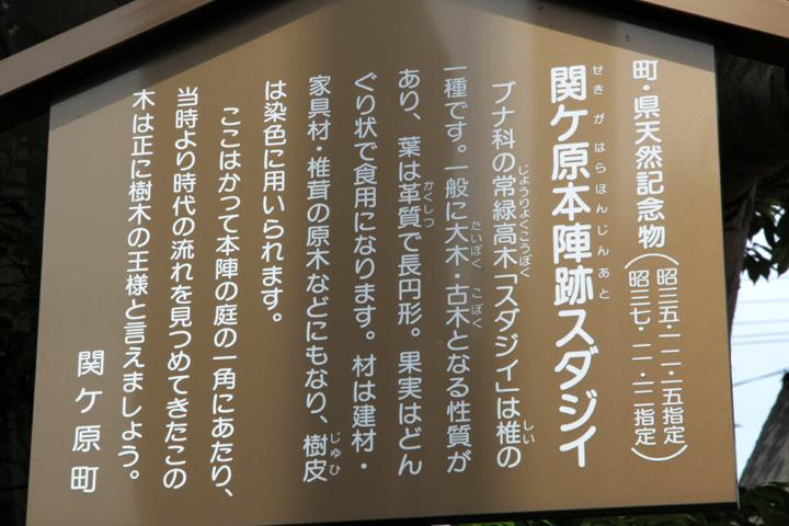 関ヶ原本陣跡スダジイ