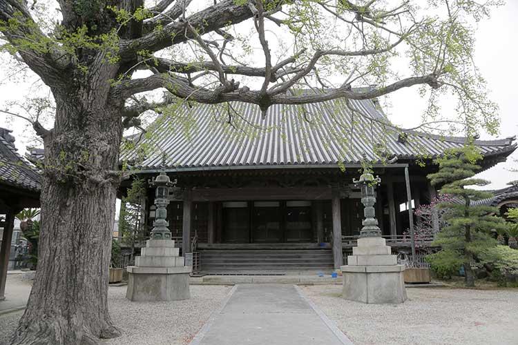 樹齢300年以上といわれる「銀杏」
