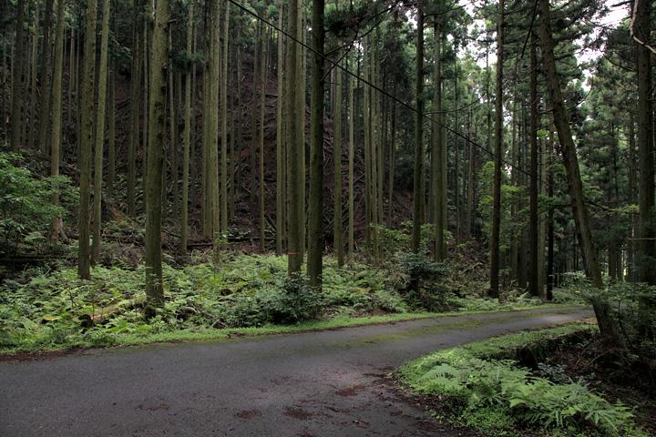 かっての坂下宿(古町と呼ばれた)へ参道を進む