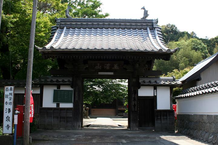浄泉寺の蘇鉄