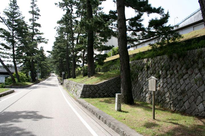 藤川の松林