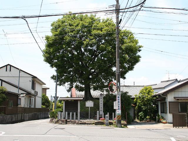 大平の一里塚南塚-塚の規模は、高さ2.4m、底部の縦7.3m、 横8.5mの菱形