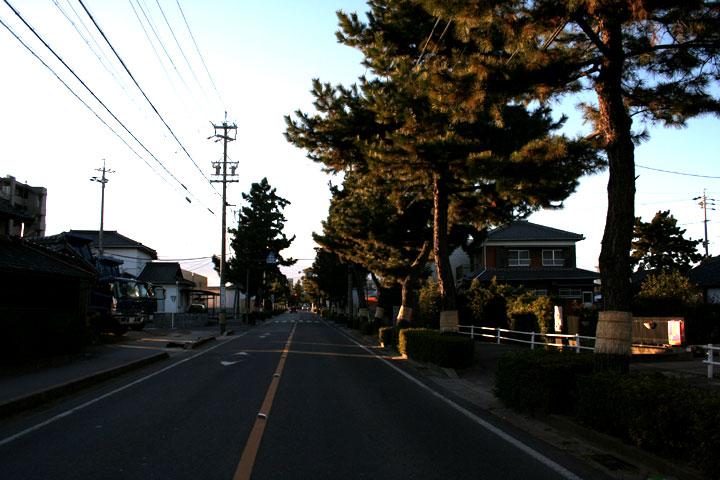 東海道に残された松林
