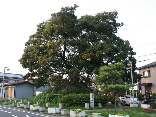 笠寺の一里塚-名古屋市内を通る旧東海道唯一の一里塚で、 現在、東側だけが 残っている