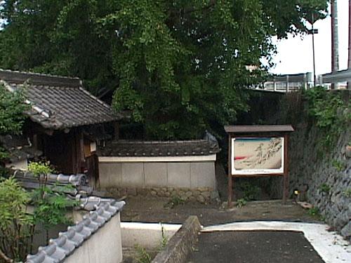 照光寺の大イチョウ