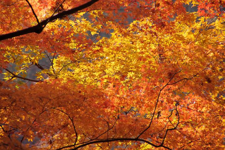 足助香嵐渓の紅葉
