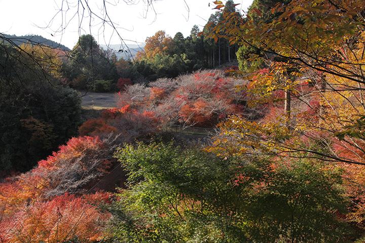 西運寺のまわりに広がる紅葉
