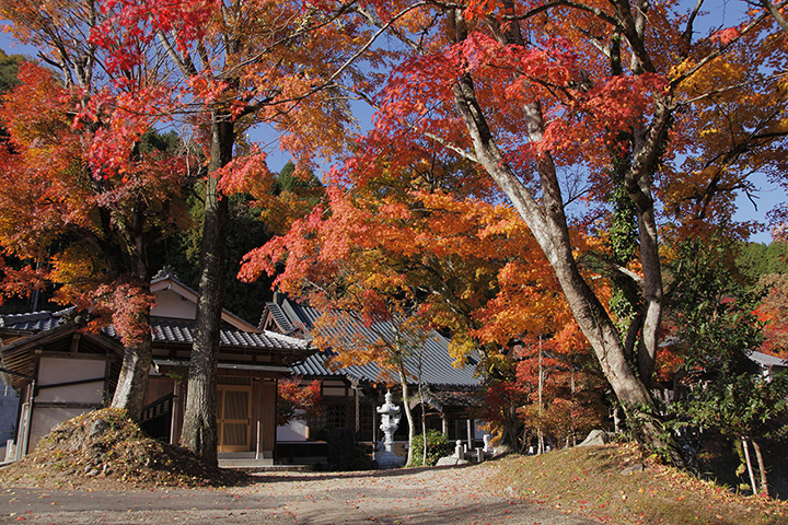 廣圓寺の紅葉