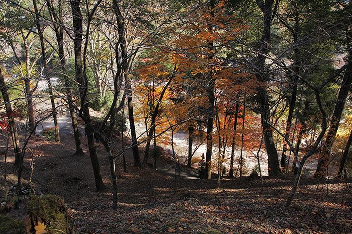 川見薬師寺の紅葉