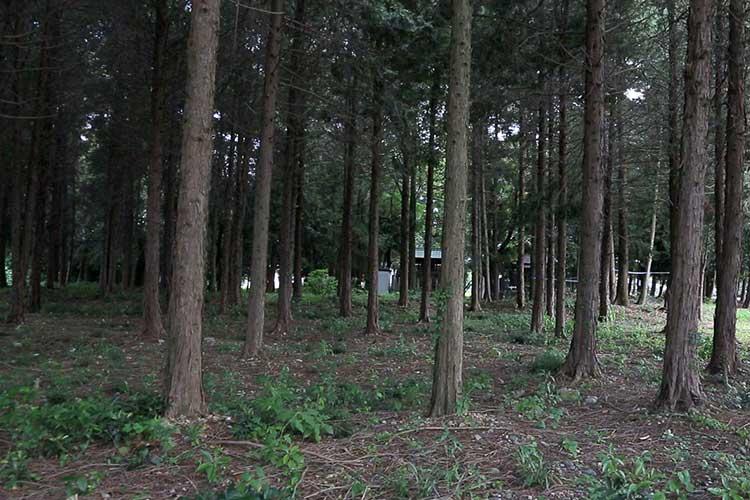 八幡林古戦場