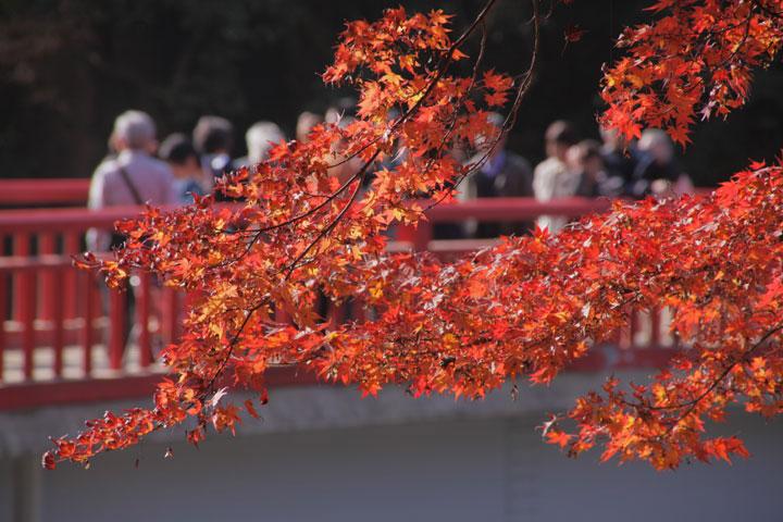 紅葉と待月橋