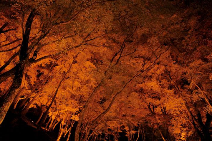 オレンジに染まる木々