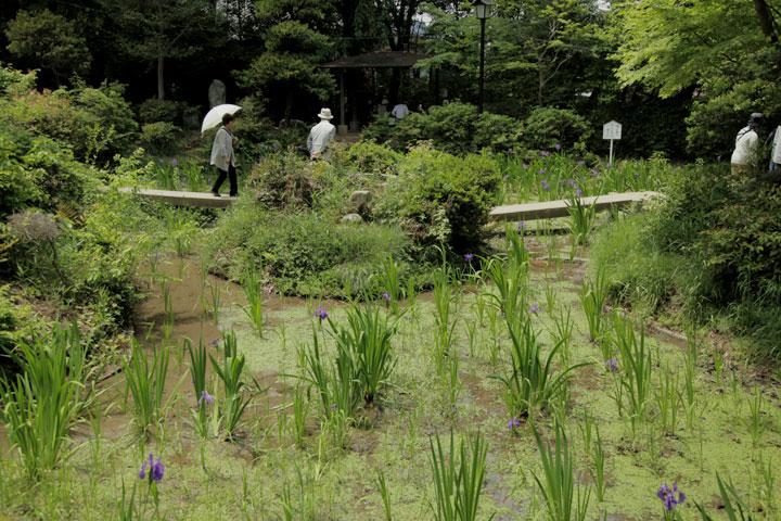 八橋かきつばた園