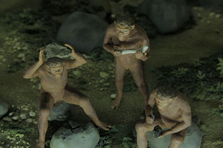 猿人ジオラマ