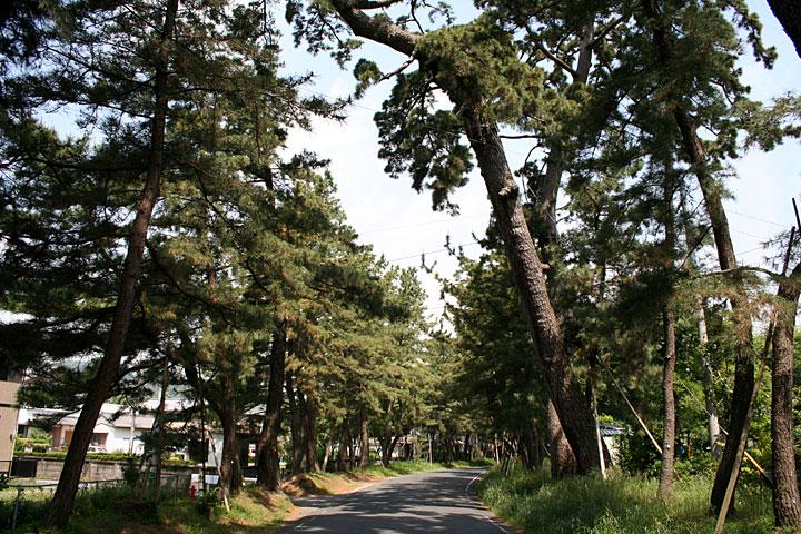 御油松林(豊川市)