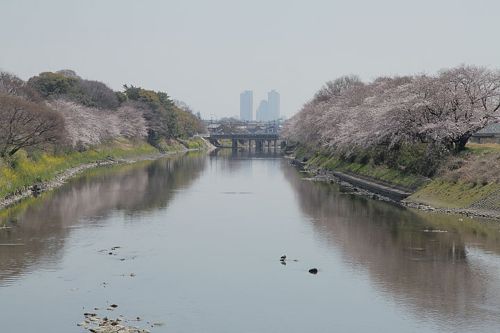五条川(清須市春日町)