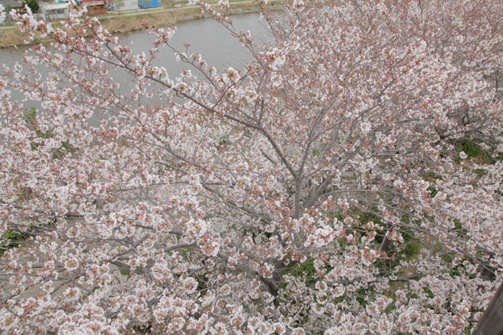 戸田川(名古屋市)